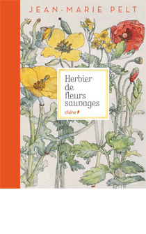 HerbierFleursSauvages